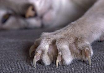 Kedi Tırnak Kesimi Nasıl Yapılmalı ?